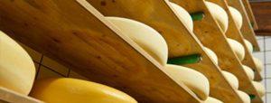 blog hoe maken we ambachtelijke boerenkaas 6